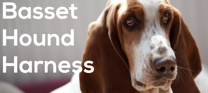 Basset hound harness guide
