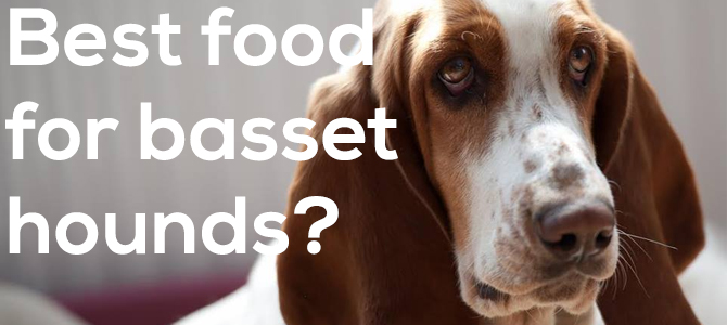 Best dog food for basset hounds