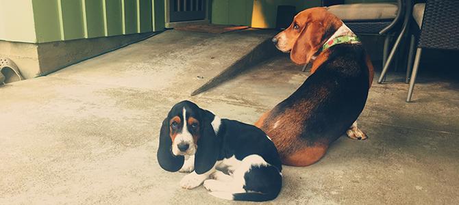 Baxter and Amos!