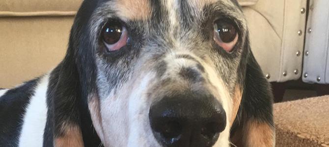 Toby (Moo)