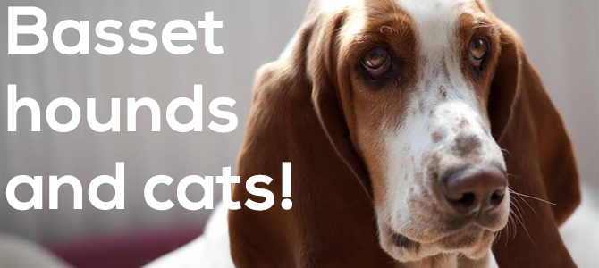 Basset Hounds and cats