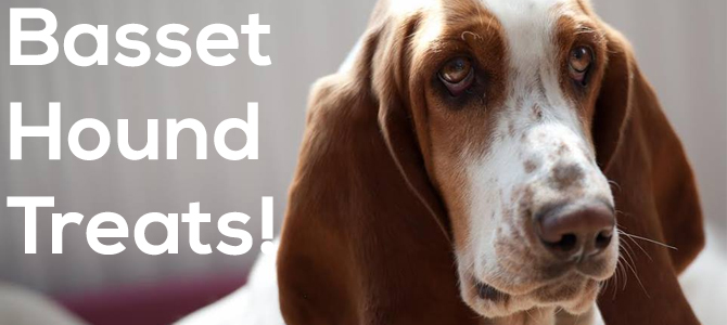 Basset hound treats for the well-behaved hound